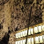 大石神社 ライトアップ 3月