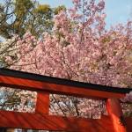 平野神社 3月26日