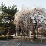 千本釈迦堂 3月