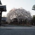 本満寺 3月