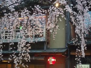 祇園白川 3月26日