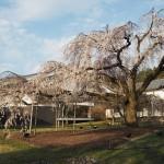 醍醐寺 霊宝館 3月