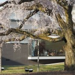 醍醐寺 霊宝館 醍醐深雪桜