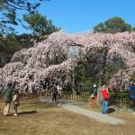 京都御苑 近衛邸跡