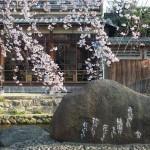 祇園白川 3月27日