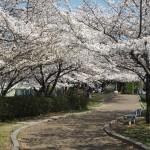 伏見 3月28日