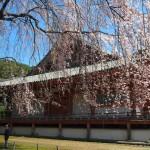 醍醐寺 3月28日