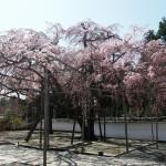 醍醐寺 三宝院 3月28日