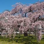 醍醐寺 3月