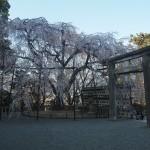大石神社 3月28日