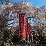 花山稲荷神社 3月28日