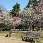 京都御苑 3月