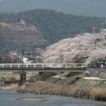 高野川 3月