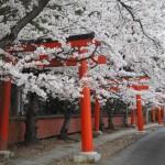 竹中稲荷神社 3月