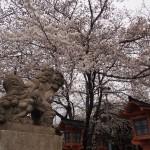 六孫王神社 3月29日