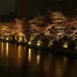 琵琶湖疏水 3月29日