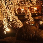 祇園白川 3月