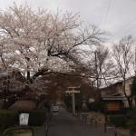 鷺森神社 3月29日