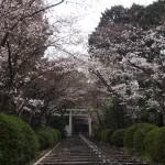 宗忠神社 3月29日