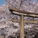 六孫王神社 3月30日