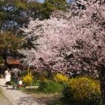 京都御苑 宗像神社 3月30日