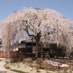本満寺 3月30日