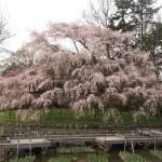 京都府立植物園 3月30日