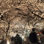 祇園白川 3月30日