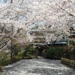 円山公園 3月