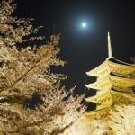 東寺 ライトアップ 3月