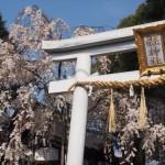 県神社 3月31日