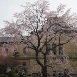 京都府庁 3月31日