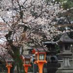 八坂神社 3月