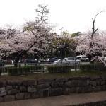 堀川 3月31日