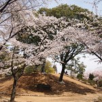 元稲荷古墳 4月1日