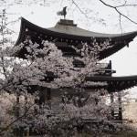 勧修寺 4月