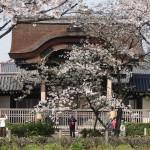 東本願寺 4月1日