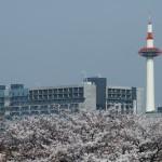 京都タワーと桜 4月1日