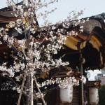滝尾神社 4月1日