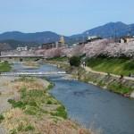 高野川 4月1日