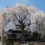 本満寺 4月