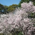宗像神社 4月1日