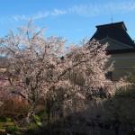 京都府庁 4月1日