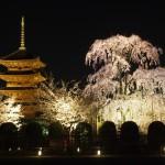 東寺 ライトアップ 4月1日