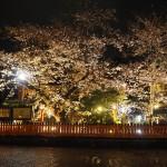 祇園白川 ライトアップ 4月