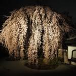 高台寺 ライトアップ 4月