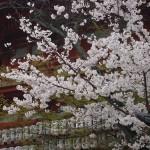 八坂神社 4月2日