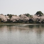 大覚寺 4月2日