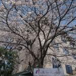烏丸通 4月2日