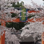 平野神社 4月2日